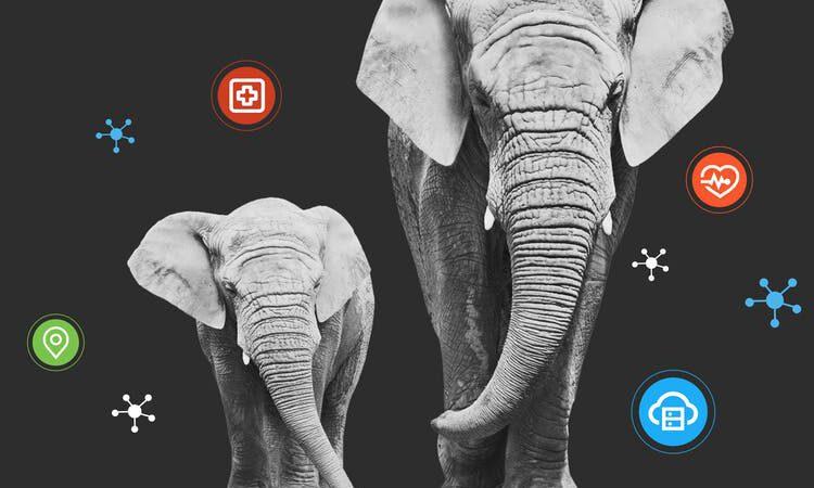Contest, um mit Künstlicher Intelligenz Elefanten zu schützen